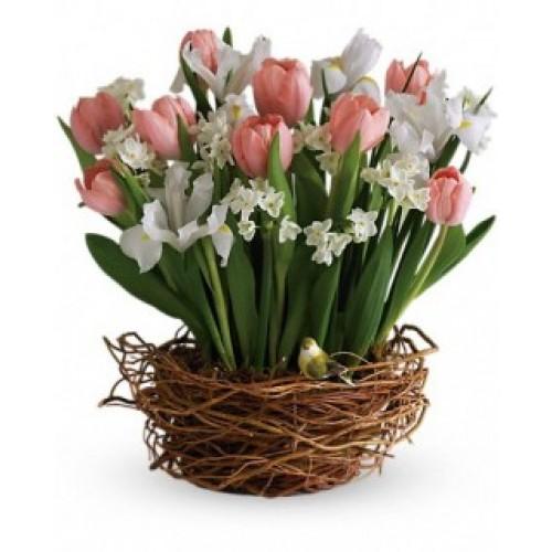 A Tulip's Song